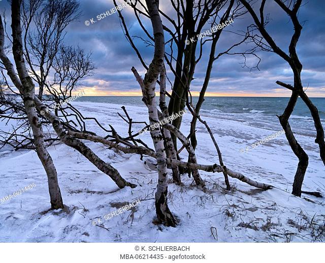 Germany, Mecklenburg-Western Pomerania, Western Pomerania Bodden area National Park, Darss, Winter mood at the West beach of Darss