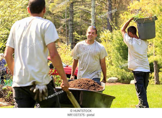 Landscapers carrying mulch to a garden in wheelbarrows