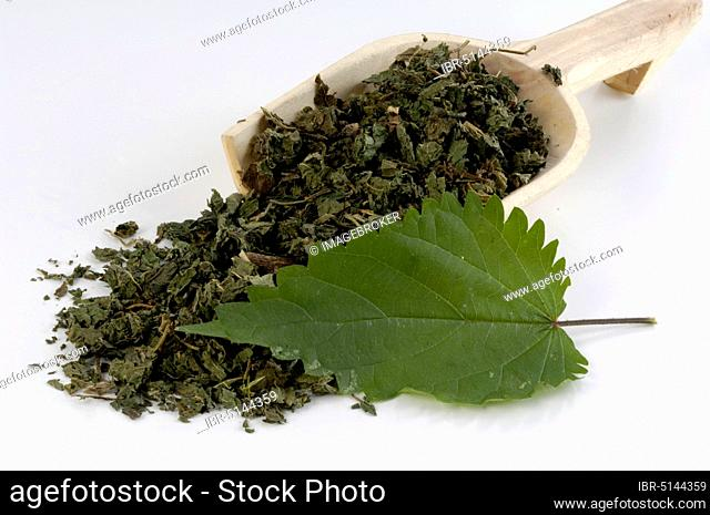 Dried nettle leaves (Urtica dioica)