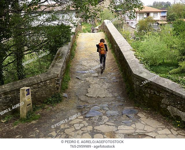 Entering Melide, Coruña. A pilgrim crosses the medieval bridge of San Xoán over the river Furelos, one of the jewels of the civil architecture of the Camino de...