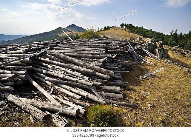 Logs on the Tiesa hill Sierra Norte Madrid Spain