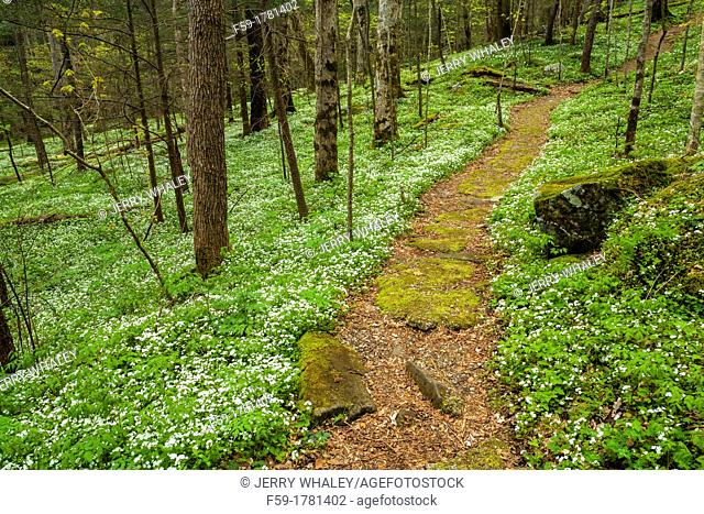 Spring, Chimneys Area, Great Smoky Mtns NP, TN
