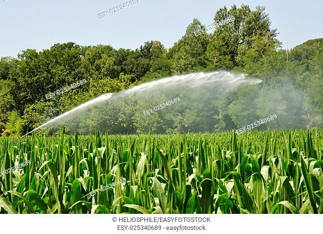 Water sprinkler installation in a field of maize in Dordogne in France