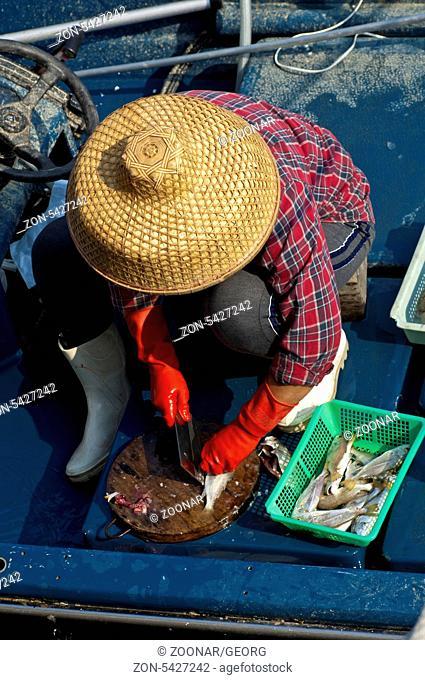 Chinesische Fischhändlerin mit Strohhut beim Säubern eines Fisches, Sai Kung Stadt, Hongkong / Chinese female fish monger with a straw hut disemboweling a fish