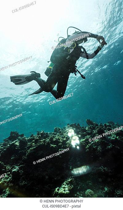 Underwater view of diver exploring coral reef at the Tubbataha Reefs Natural Park, Cagayancillo, Palawan, Philippines