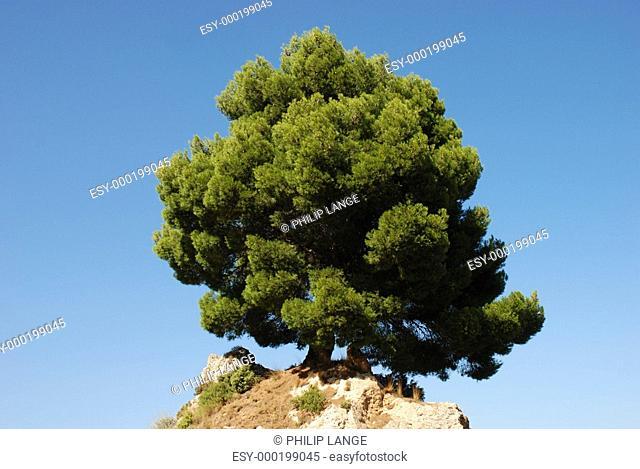 Einsamer Baum auf dem Hügel
