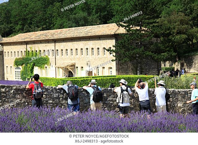 Photographers lean over the wall to photograph the lavender in front of the Notre-Dame de Sénanque Abbey Provence France