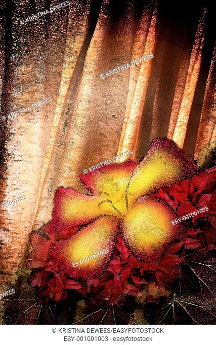 A tropical hibiscus against a textured curtain background