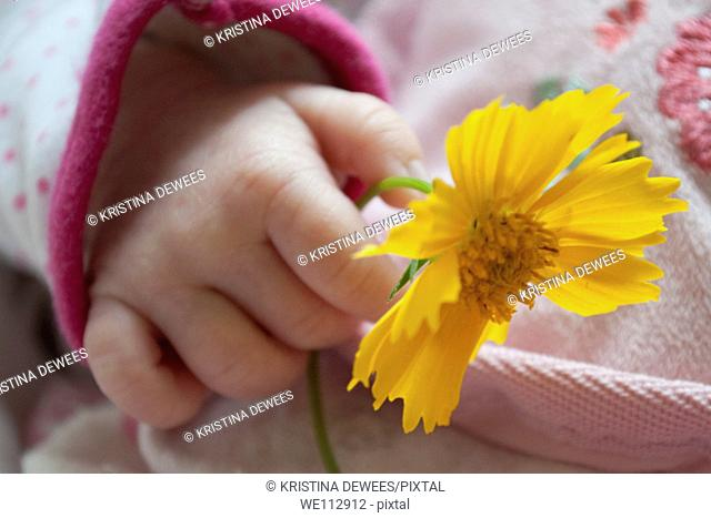 The hand of a baby girl holding a Coreopsis flower