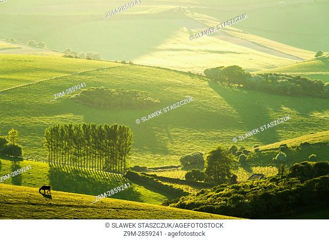 Spring in South Downs National Park near Brighton, East Sussex, England
