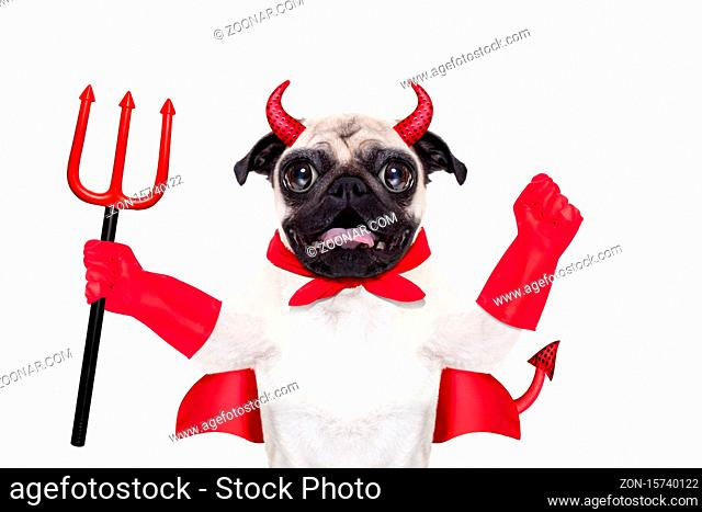 halloween devil pug dog with red cape, isolated on white background