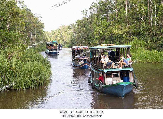 Asia, Indonesia, Borneo, Tanjung Puting National Park, Klotok on the Sekonyer river,