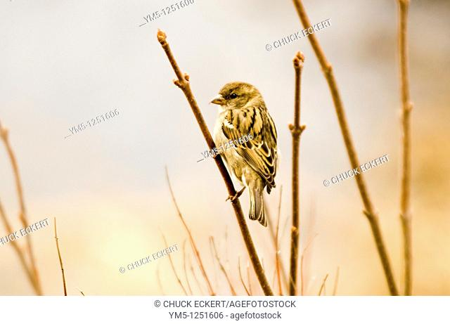 Sparrow on branch next to marshland