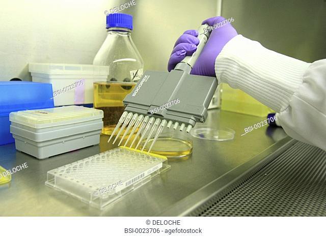 BIOLOGY LABORATORY<BR>Photo essay from laboratory.<BR>Laboratory of cellular microbiology at the University medical centre of Geneva (Switzerland)