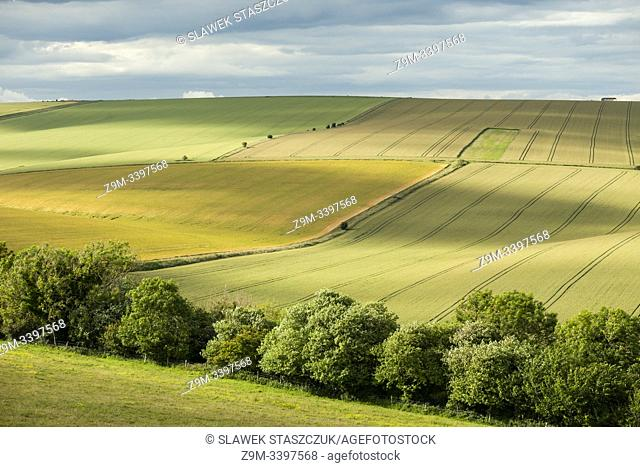 Summer in South Downs National Park, West Sussex, England