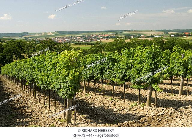 Vineyard above village of Schrattenberg, Niederosterreich, Austria, Europe