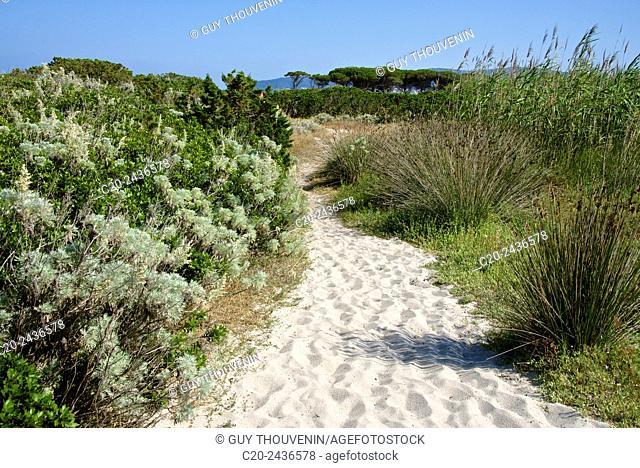 Sandy path to the beach, scrub plants and pine trees in the background, Costa degli Oleandri, near Ottiolu harbour, Sardinia, Italy