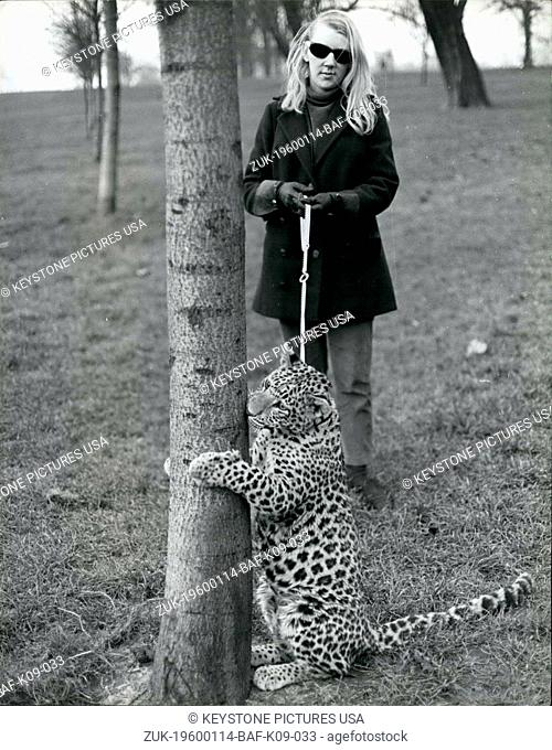 1968 - Angela takes her pet leopard, Michael, for his walk in Kensington Gardens. She bought Michael for ?200 in the Tyseley pet stores in Birmingham