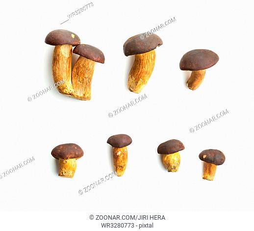 Fresh boletus mushrooms isolated on white background. Tasty food mushrooms