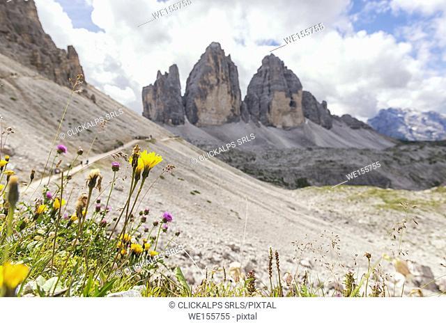 Europe, Italy, Dolomites. Tre Cime di Lavaredo, the iconic shape of the Dolomites