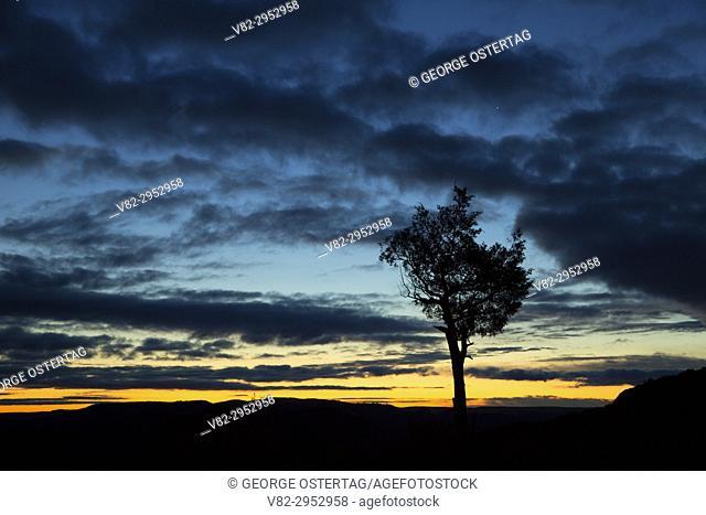 Juniper sunrise at Scoria Point Overlook, Theodore Roosevelt National Park-South Unit, North Dakota