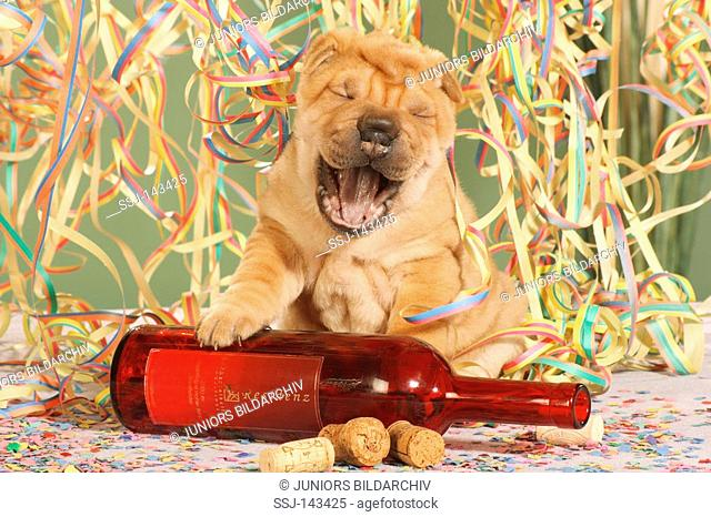 Shar Pei puppy sitting at bottle - between paper streamers