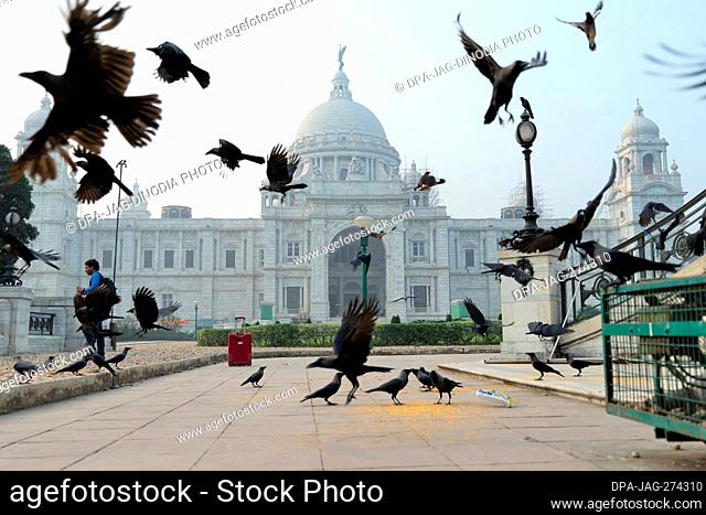 Crows feeding and flying, Victoria Memorial, Kolkata, West Bengal, India, Asia