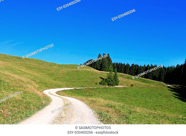 A trekking pathway on meadow and close to the forest in Tirol, Austria - Europe