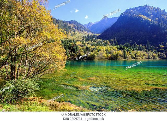 Asia, China, Sichuan province, UNESCO World Heritage Site, Jiuzhaigou National Park, Colorful lake