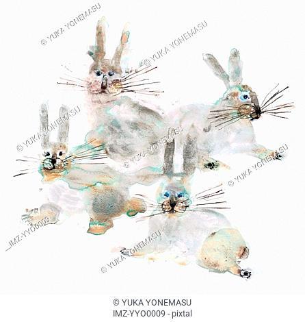 Four rabbits