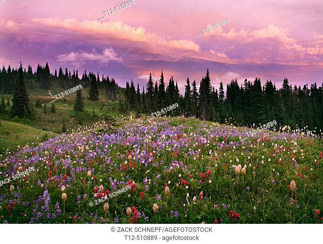 Wildflowers at sunset on Mount Rainier