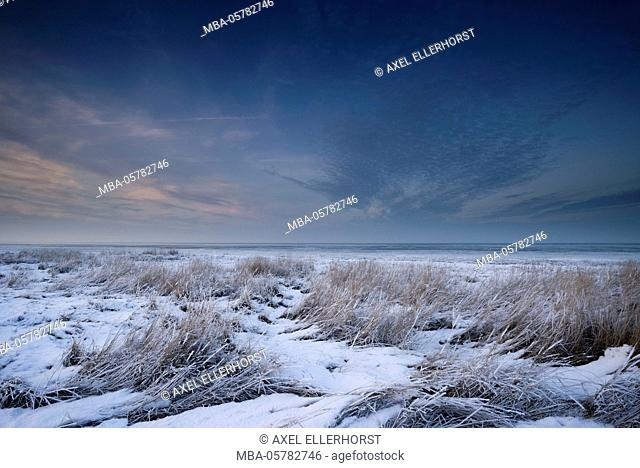 Snow and ice cream in the mud flats, beach grass, evening light, Dangast, Jade Bay, the North Sea, Frisia, Lower Saxony, Germany
