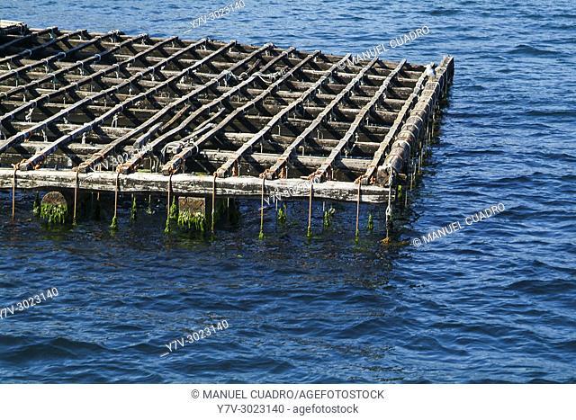 Batea (platform for mussel cultivation). Ria de Vigo, Pontevedra, Galicia, Spain