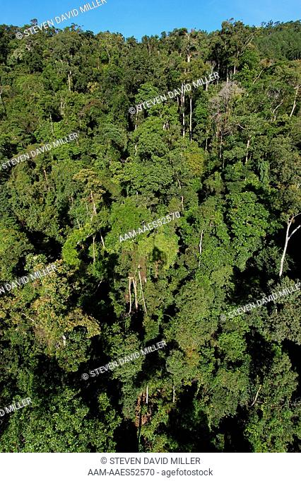 Looking down on the rainforest canopy of Barron Gorge National Park, Skyrail from Kuranda to Cairns, Queensland, Australia, Rainforest, June Note: