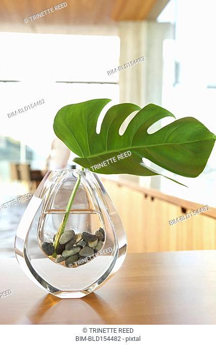 Close up of leaf in minimalist vase
