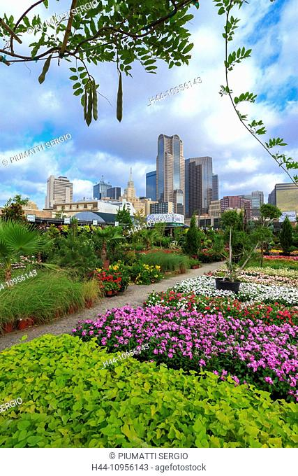 colourful, Dallas, Farmers Market, garden center, nursery, Ruibal, skyline, Texas, USA, United States, America