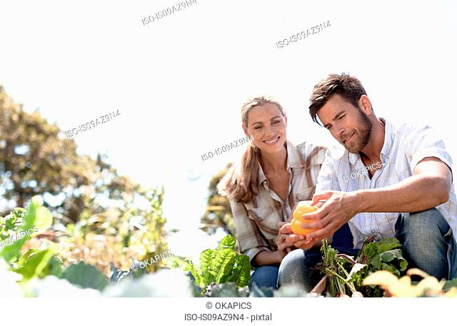 Mature couple inspecting freshly grown pepper