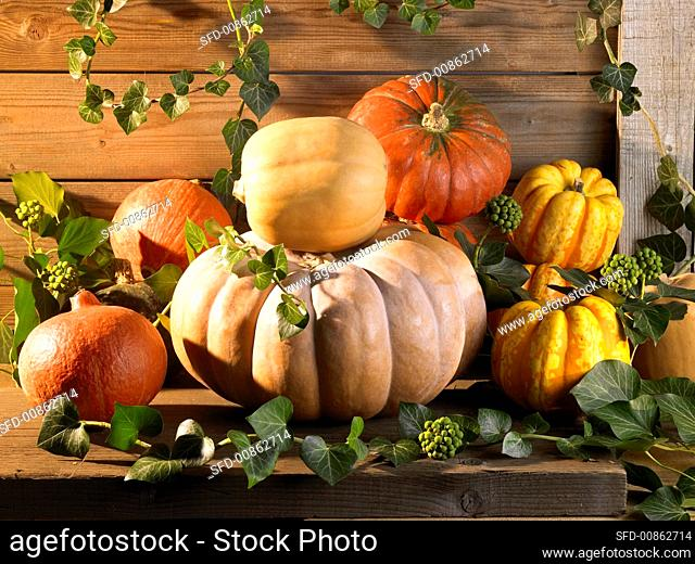 Several pumpkins on a wooden bench