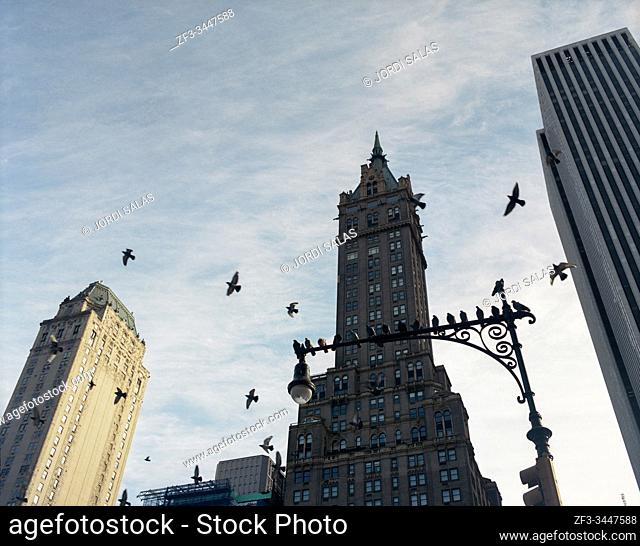 Pigeons flying over an street lamp in front of The Sherry-Netherland Hotel, New York City