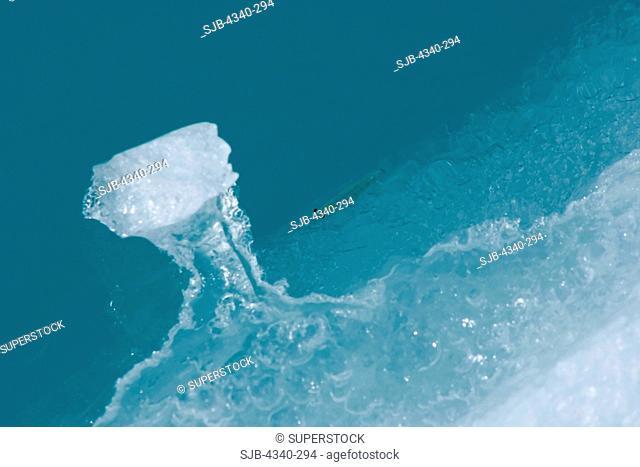Antarctic Krill on Ice