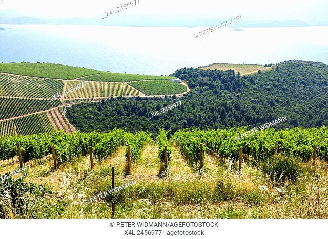 Wine growing area, Silvno, Dalmatia, Croatia