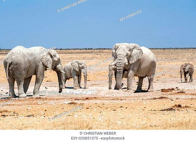 elefanten an wasserloch etosha nationalpark namibia