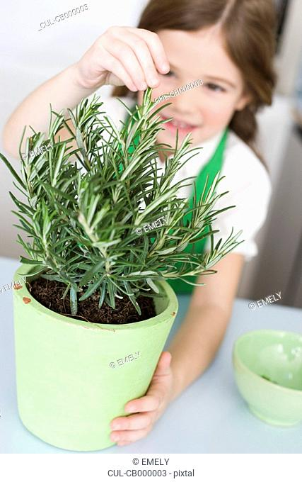 Girl pulling herbs