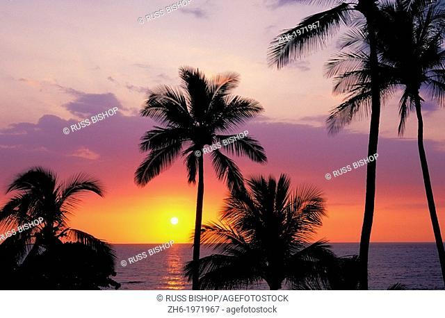 Sunset over the Pacific Ocean through palm trees at Hapuna Beach, Kohala Coast, The Big Island, Hawaii USA