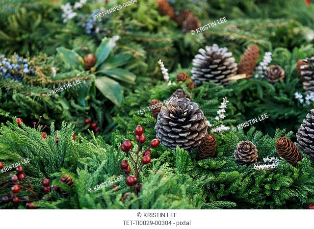 Pine fronds and pine cones