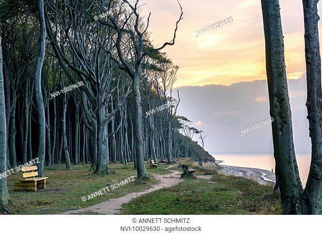 Ghost Forest, Nienhagen, Mecklenburg-Western Pomerania, Germany