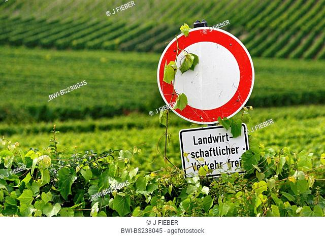 traffic signview at rows of grape vine from the inside of a vineyard saying 'free for agricultural traffic', Germany, Rhineland-Palatinate