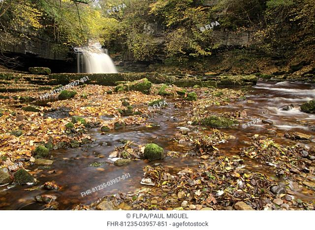 View of waterfall and autumn leaves, Cauldron Falls, Walden Beck, River Ure, West Burton, Wensleydale, Yorkshire Dales N P , North Yorkshire, England, October
