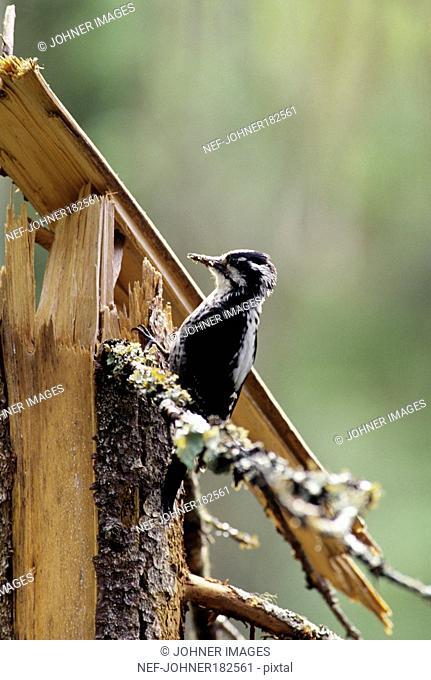 Bird sitting on tree trunk