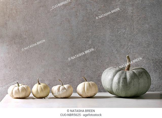 Grey Confection and white whole uncooked decorative pumpkins in row on white marble table with grey wall at background. Autumn minimalist decoration